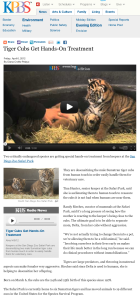Tiger Cubs Get Hands-On Treatment